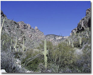 Students in the Genetics Program use the Sonoran Desert and mountain ranges around Tucson for research and recreation.